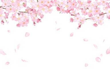 桜と散る花びらのフレーム 水彩イラストトレースベクター