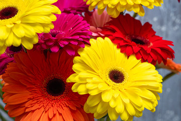 Beautiful gerbera flowers in yellow and red. Spring background.