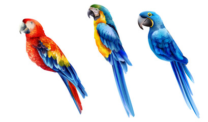 Set of colorful watercolor parrots in different coloration