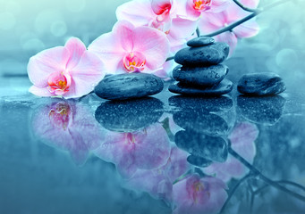 Keuken foto achterwand Orchidee Pink orchid flower and spa stones with water drops isolated .