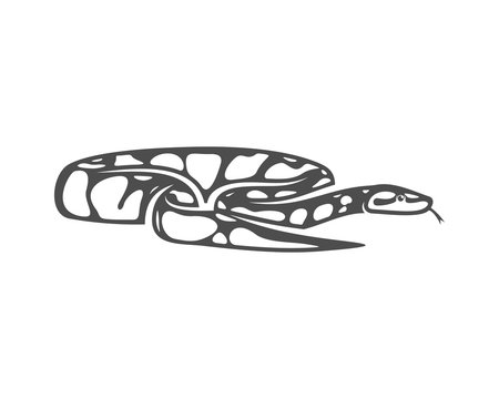 Python snake logo vector, Animal graphic, Snake design Template illustration