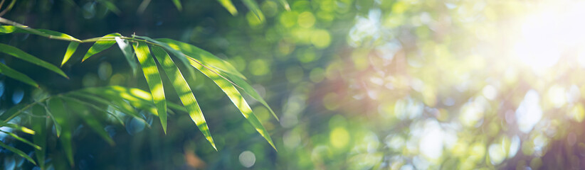Spoed Fotobehang Bamboo Bamboo leaves, Green leaf on blurred greenery background. Beautiful leaf texture in sunlight. Natural background. close-up of macro with free space for text.