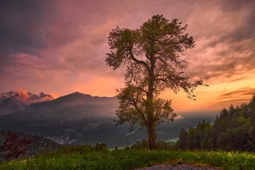 Foto auf AluDibond Koralle Baum – Schweizer Berge am Abendhimmel