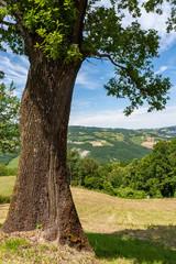 terra, cielo, colline, quercia