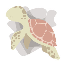 Picture of a turtle on a white background
