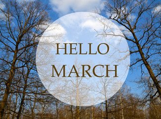 Hello March greeting card.Branches of spring trees in the forest on a blue sky background.Springtime concept.