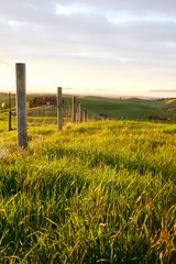 Canvas Prints Honey rural landscape with wooden fence and wheat field