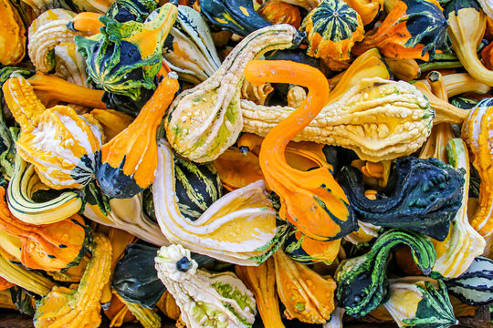 Decorative fall gourds in assorted colors green, orange, yellow, and white