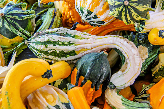 Decorative fall gourds in yellow, orange, and green