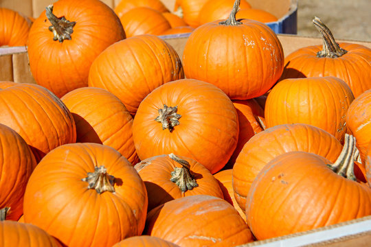 Large cardboard boxes filled with small round orange pumpkins for sale