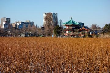 上野公園 不忍池