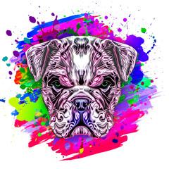 colored artistic bulldog on white background