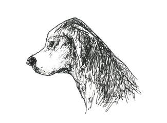犬の横顔 垂れ耳