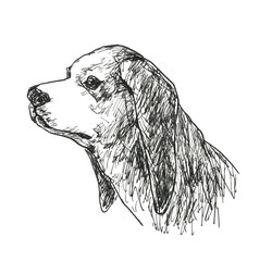 垂れ耳の犬の横顔