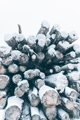 Big stack of snow covered pine logs. Vertical layout