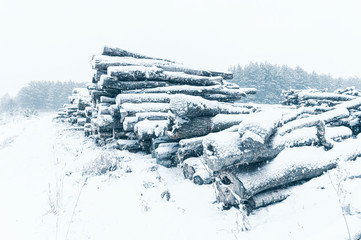 Stack of logs in front of pine forest. Winter time, snowfall. Horizontal layout