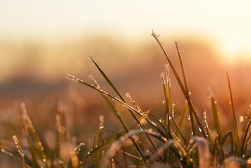Frozen grass close up at sunset. Nature background.