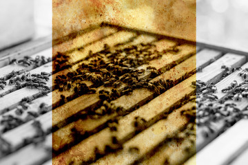 Bee honeycombs and old photos effect with border.