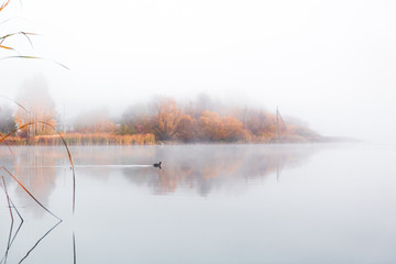 A wonderful morning on the shore of the lake in a haze of fog. Reflection of trees in the surface of the water. - 321417017