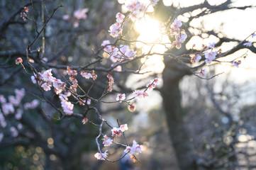 余寒見舞いにも ピンクの梅の花