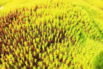 Foto op Aluminium Zwavel geel 이끼의 아름다운 풍경이다.