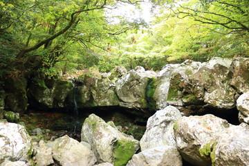 Poster Jaune de seuffre 제주 한라산 숲속의 아름다운 풍경이다.