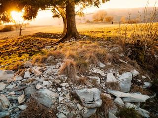 immagine autunnale con radici abete e erba secca