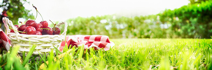 Summer background with ripe cherry on the green grass