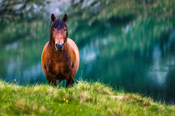 Big brown horse by a lake