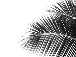 Wall Mural - black and white coconut leaf silhouette