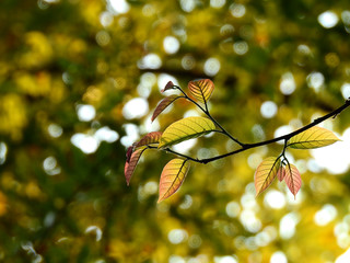 Wall Mural - colorful leaf on branch tree at spring
