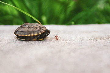 Baby turtle and ant friend on the floor in nature,Good friendship concept