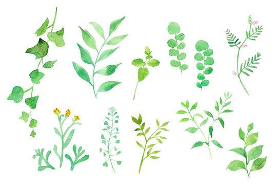 グリーンの色々な草花 水彩イラスト
