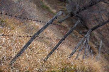 recinto, animali, filo spinato