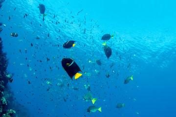 diving in colorful reef underwater in mexico cortez sea cabo pulmo