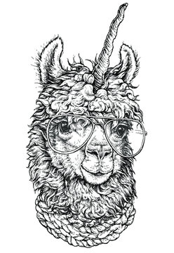 LAMA / llamacorn in eyeglasses, Hipster style drawing, isolated on white. Object for advertisement, web page design, poster, banner, print element. vector illustration.