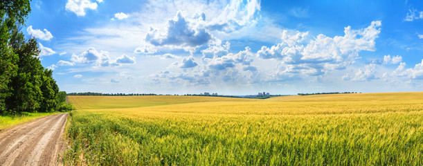 Foto op Plexiglas Blauwe hemel Rural landscape, panorama, banner - field of young wheat and country road in the rays of the summer sun