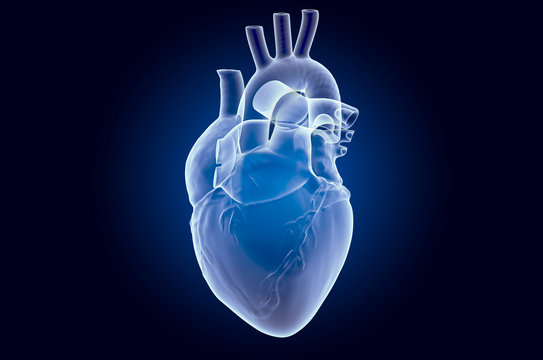 Human heart, x-ray hologram. 3D rendering