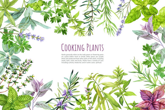Culinary herbs and plants, frame, hand drawn watercolor