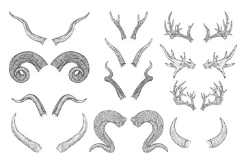 Vector set of hand drawn animals horns on white background. Sketch illustration. Monochrome image.