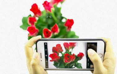 woman hand taking photos of red roses bouquet with oil painting effect.