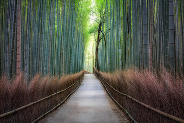 Wall Murals Bamboo Bamboo forest in Arashiyama, Japan