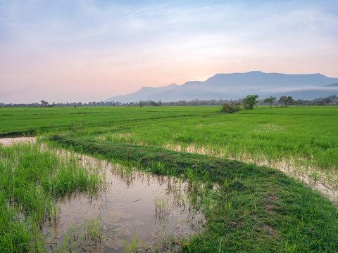 Rices paddies at sunset in Champassak, Laos