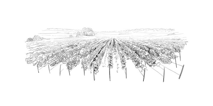 Vineyard landscape. France. Vector sketch design. Hand drawn illustration