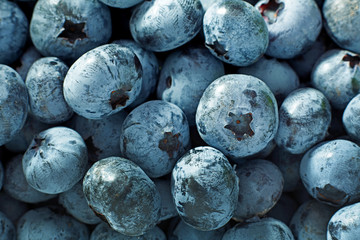 Blueberry berries closeup background