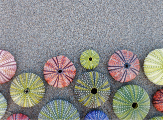 collection of colorful sea urchin shells on wet sand beach, space for text