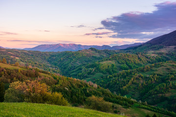 rural landscape in mountains at dusk. amazing view of carpathian countryside with fields and trees on rolling hills. glowing purple clouds on the sky. calm weather in springtime
