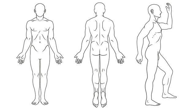 Human body front, back and side views