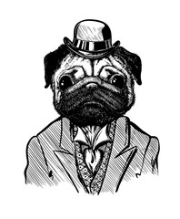 Dog in a suit and hat, isolated, drawn by hand, with a feather on a white background. Pug character with character, big eyes in a tuxedo, with a collar and tie in retro style.