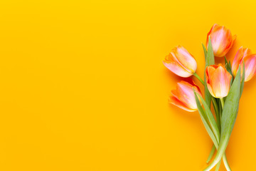Yellow pastels color tulips on yellow background. Fototapete